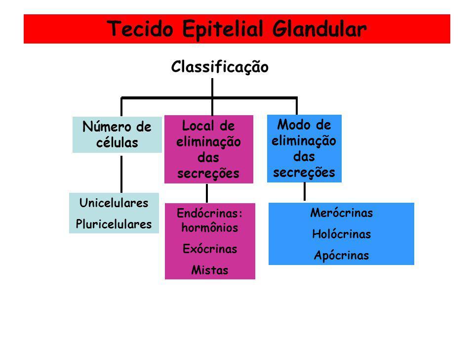 Tecido Epitelial Glandular Classificação Local de eliminação das secreções Endócrinas: hormônios Exócrinas Mistas Modo de eliminação das secreções Mer