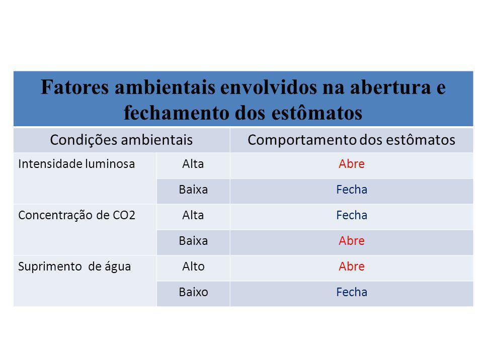 Fatores ambientais envolvidos na abertura e fechamento dos estômatos Condições ambientaisComportamento dos estômatos Intensidade luminosaAltaAbre Baix