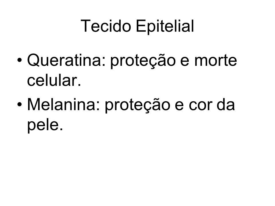 Queratina: proteção e morte celular. Melanina: proteção e cor da pele.
