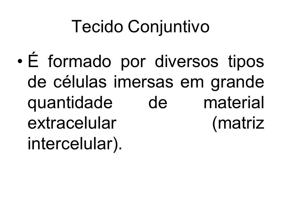 Tecido Conjuntivo É formado por diversos tipos de células imersas em grande quantidade de material extracelular (matriz intercelular).