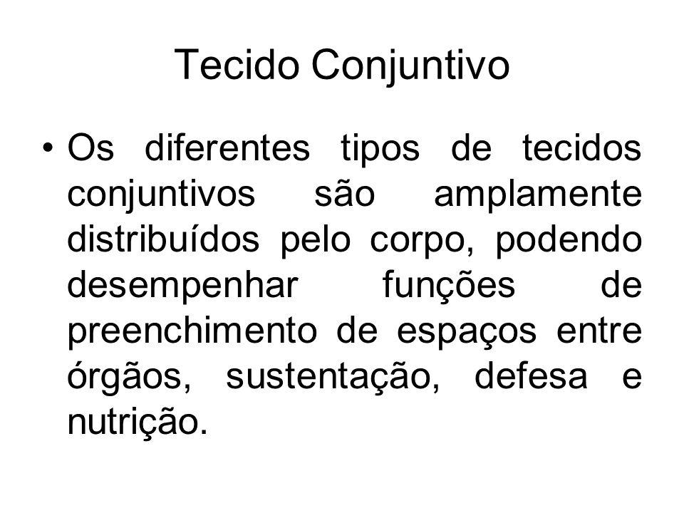 Tecido Conjuntivo Os diferentes tipos de tecidos conjuntivos são amplamente distribuídos pelo corpo, podendo desempenhar funções de preenchimento de e