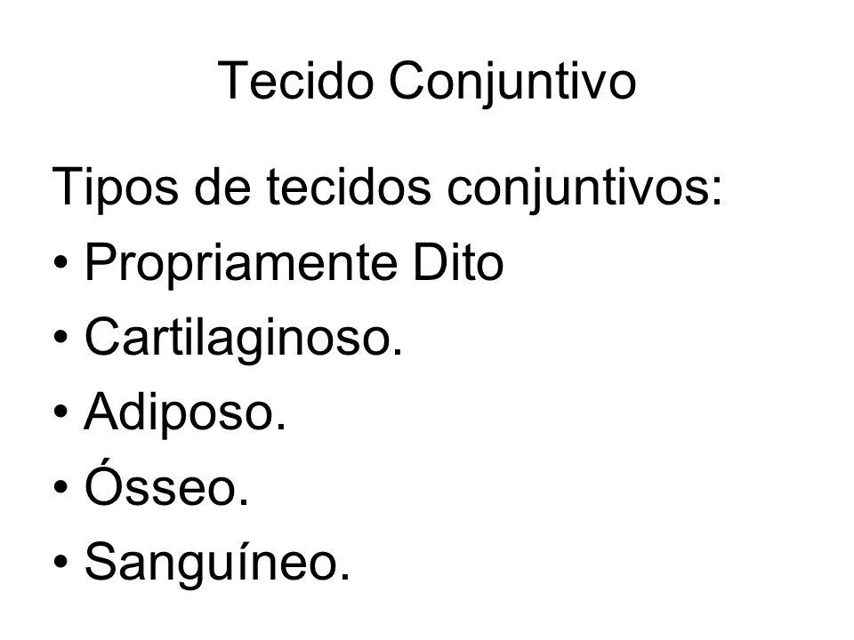 Tecido Conjuntivo Tipos de tecidos conjuntivos: Propriamente Dito Cartilaginoso. Adiposo. Ósseo. Sanguíneo.