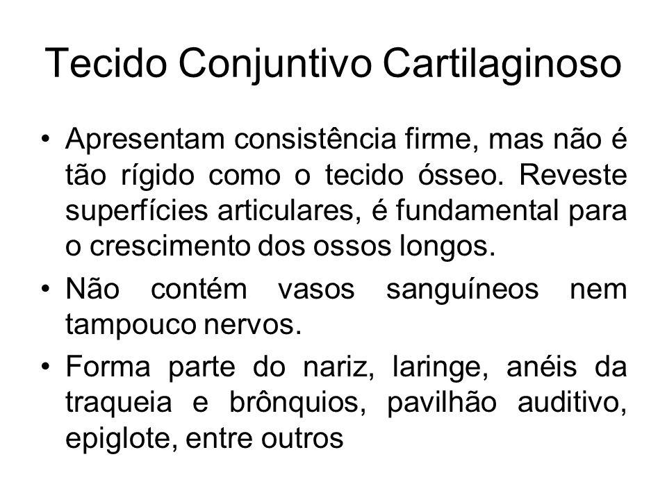 Tecido Conjuntivo Cartilaginoso Apresentam consistência firme, mas não é tão rígido como o tecido ósseo. Reveste superfícies articulares, é fundamenta