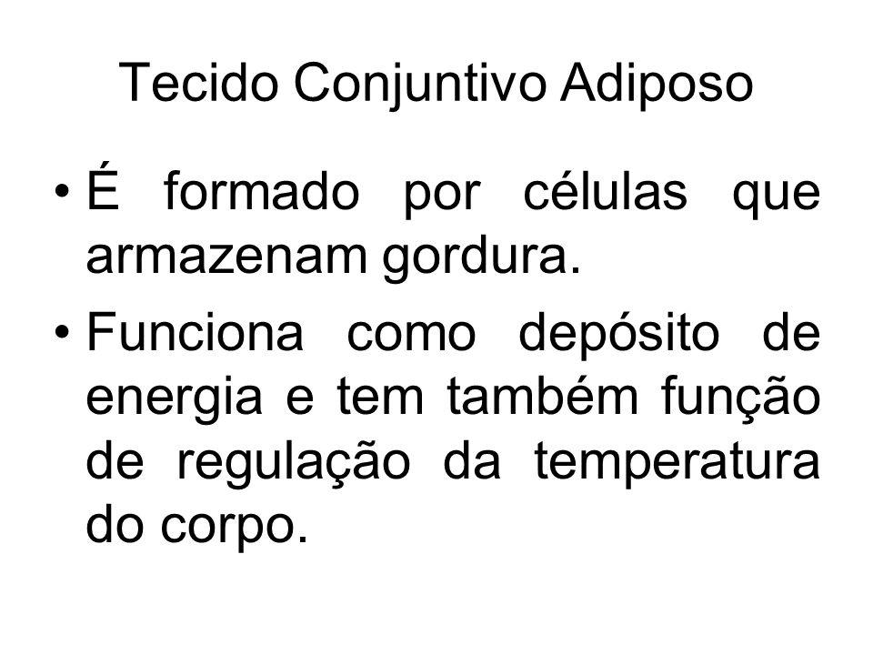Tecido Conjuntivo Adiposo É formado por células que armazenam gordura. Funciona como depósito de energia e tem também função de regulação da temperatu