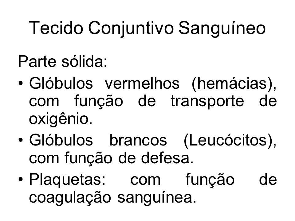 Tecido Conjuntivo Sanguíneo Parte sólida: Glóbulos vermelhos (hemácias), com função de transporte de oxigênio. Glóbulos brancos (Leucócitos), com funç