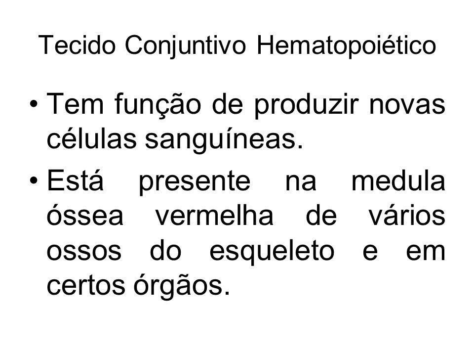 Tecido Conjuntivo Hematopoiético Tem função de produzir novas células sanguíneas. Está presente na medula óssea vermelha de vários ossos do esqueleto