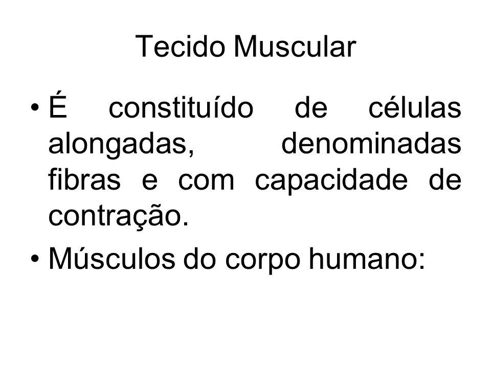 Tecido Muscular É constituído de células alongadas, denominadas fibras e com capacidade de contração. Músculos do corpo humano: