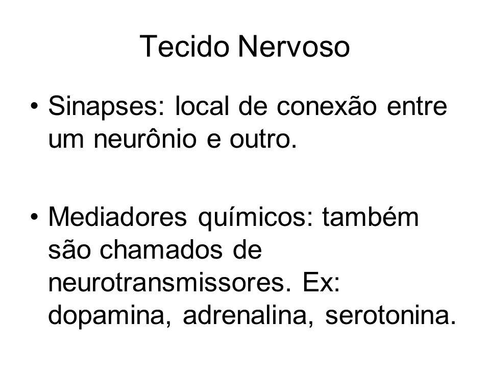 Tecido Nervoso Sinapses: local de conexão entre um neurônio e outro. Mediadores químicos: também são chamados de neurotransmissores. Ex: dopamina, adr