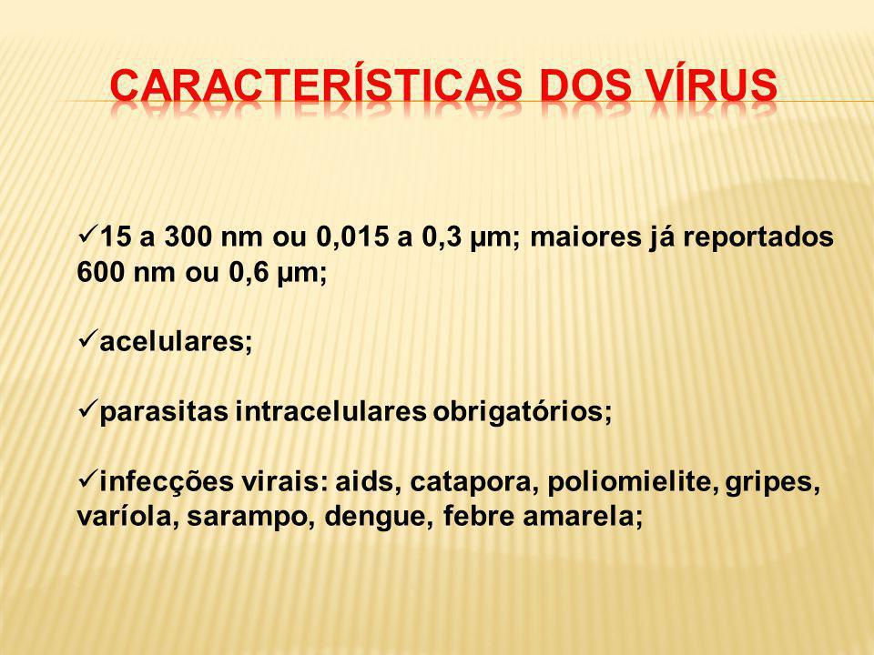 15 a 300 nm ou 0,015 a 0,3 µm; maiores já reportados 600 nm ou 0,6 µm; acelulares; parasitas intracelulares obrigatórios; infecções virais: aids, cata