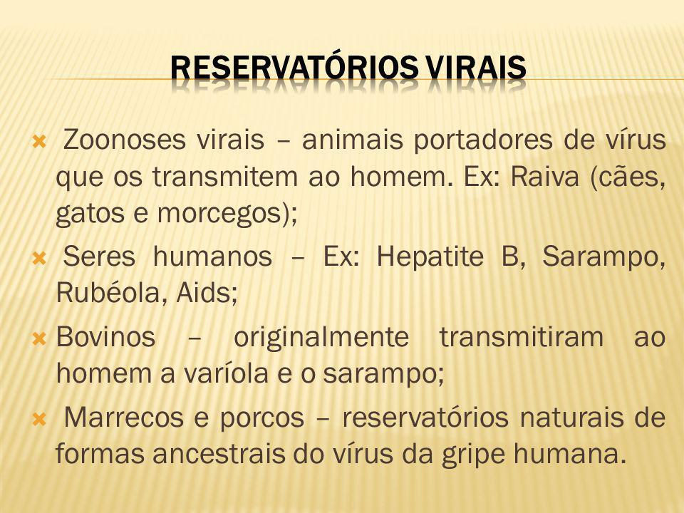 Zoonoses virais – animais portadores de vírus que os transmitem ao homem. Ex: Raiva (cães, gatos e morcegos); Seres humanos – Ex: Hepatite B, Sarampo,