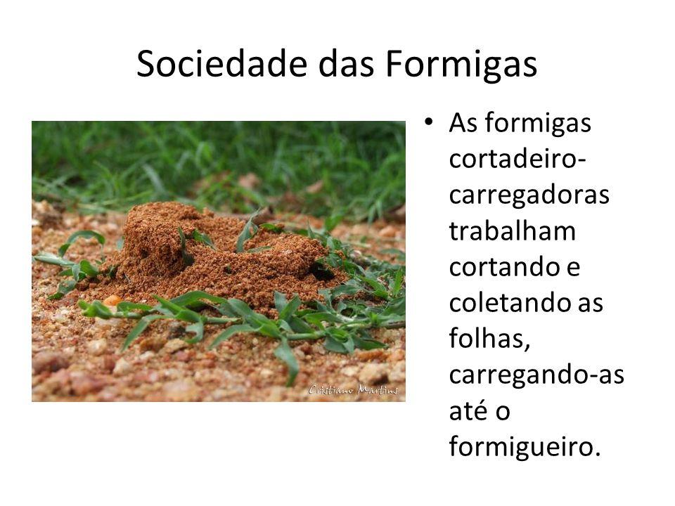 Sociedade das Formigas As formigas cortadeiro- carregadoras trabalham cortando e coletando as folhas, carregando-as até o formigueiro.