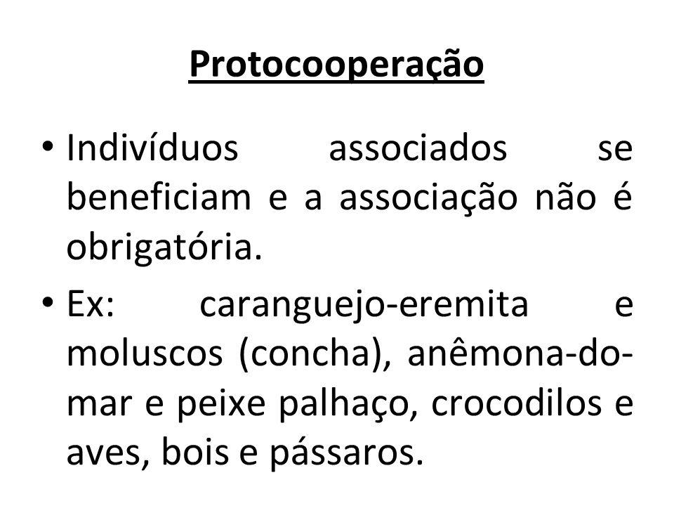 Protocooperação Indivíduos associados se beneficiam e a associação não é obrigatória. Ex: caranguejo-eremita e moluscos (concha), anêmona-do- mar e pe