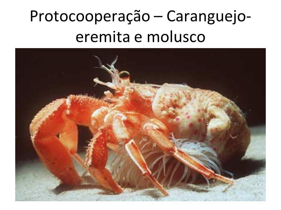 Protocooperação – Caranguejo- eremita e molusco