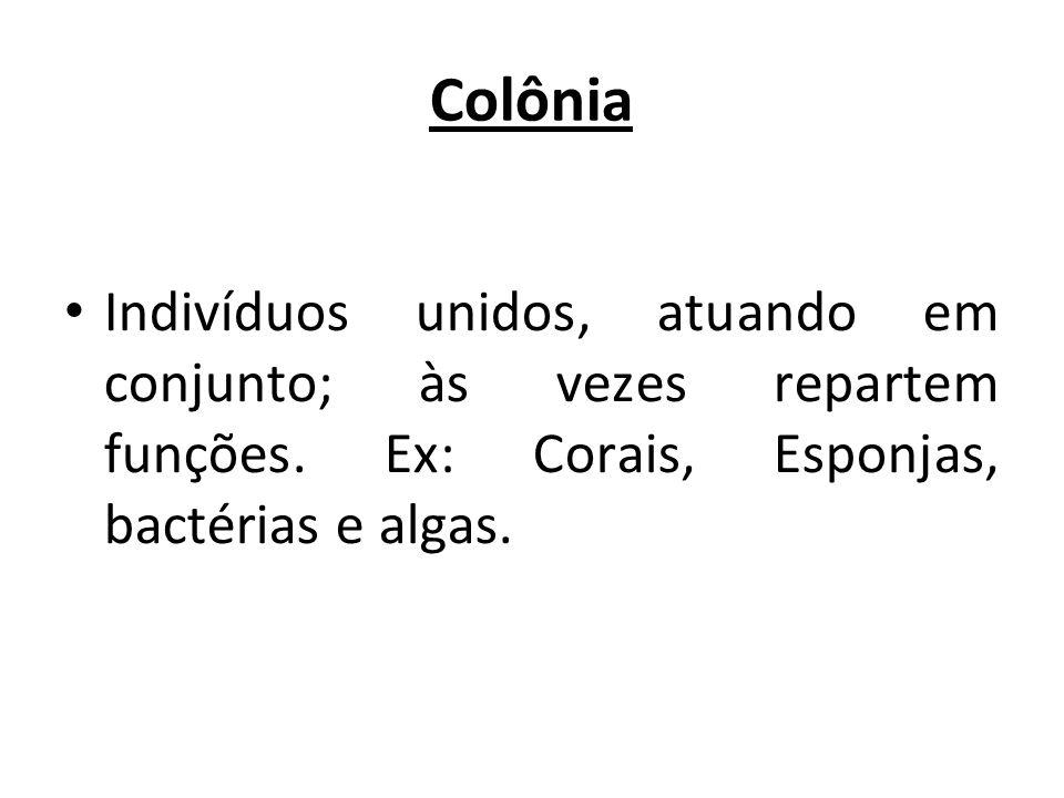 Colônia Indivíduos unidos, atuando em conjunto; às vezes repartem funções. Ex: Corais, Esponjas, bactérias e algas.