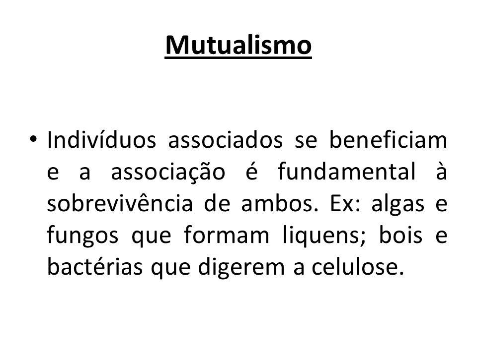 Mutualismo Indivíduos associados se beneficiam e a associação é fundamental à sobrevivência de ambos. Ex: algas e fungos que formam liquens; bois e ba