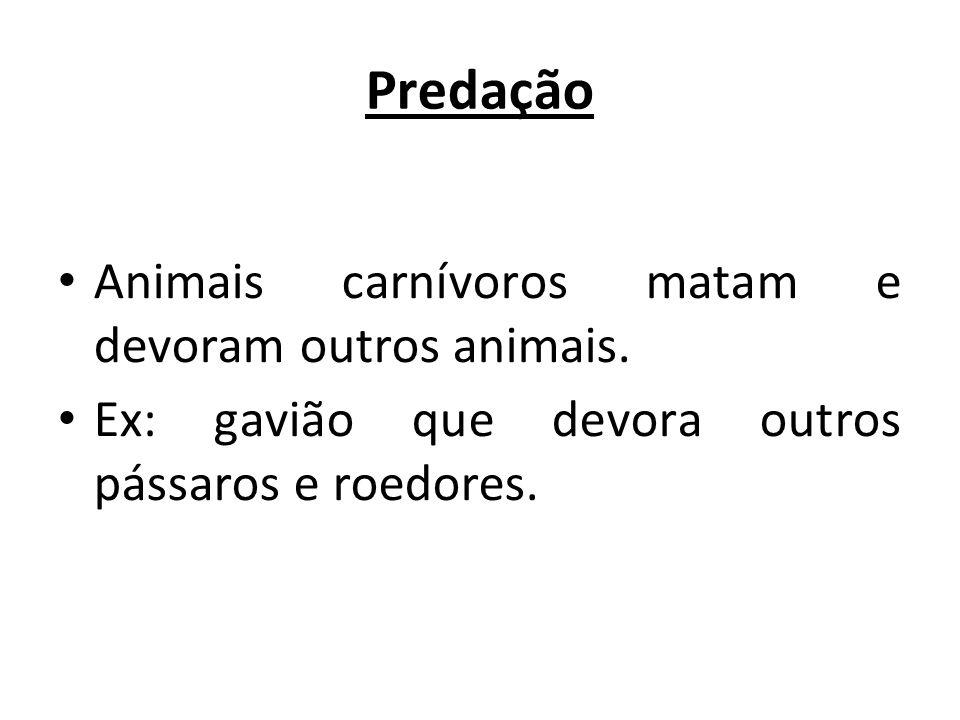 Predação Animais carnívoros matam e devoram outros animais. Ex: gavião que devora outros pássaros e roedores.