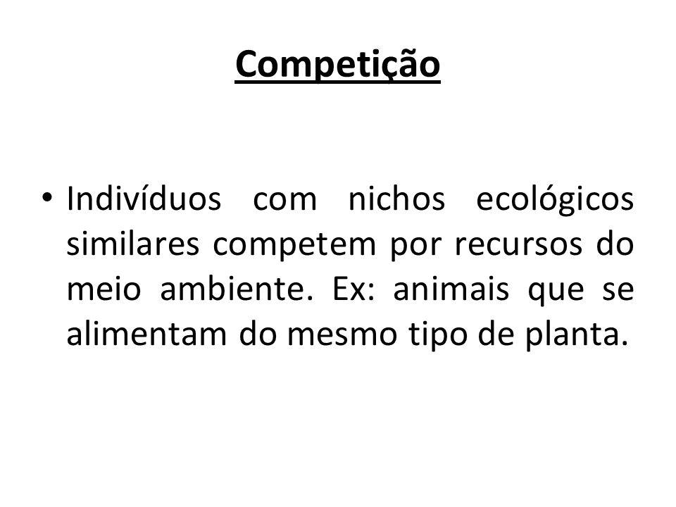 Competição Indivíduos com nichos ecológicos similares competem por recursos do meio ambiente. Ex: animais que se alimentam do mesmo tipo de planta.