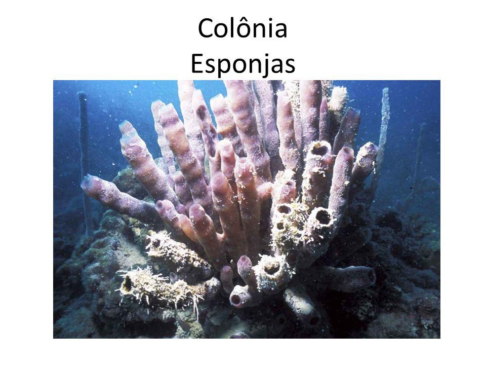 Colônia Bactérias