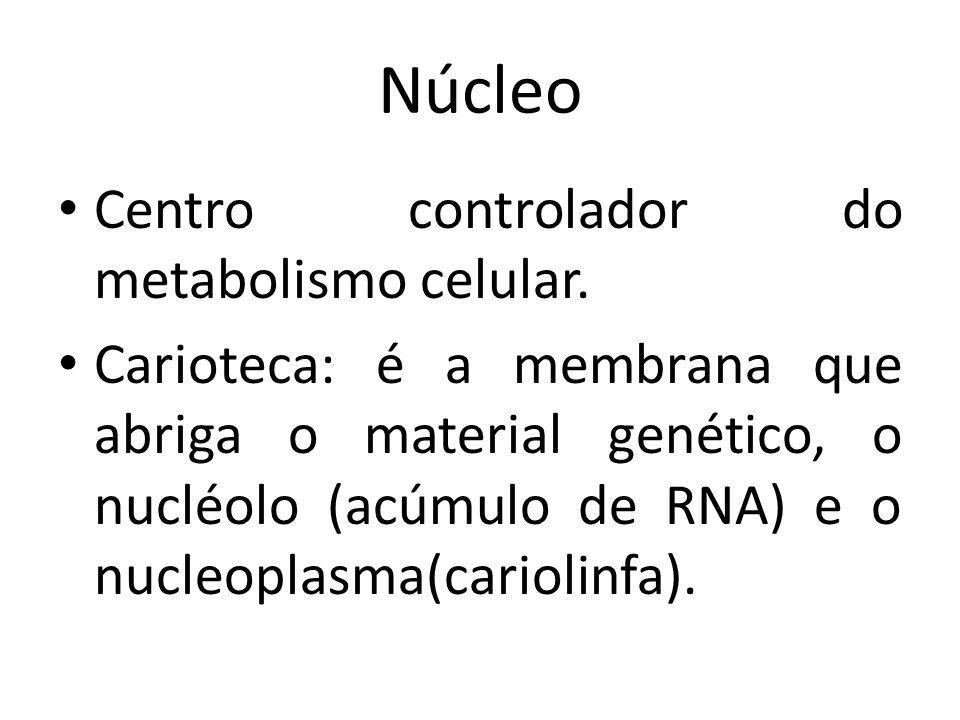 Centro controlador do metabolismo celular. Carioteca: é a membrana que abriga o material genético, o nucléolo (acúmulo de RNA) e o nucleoplasma(cariol