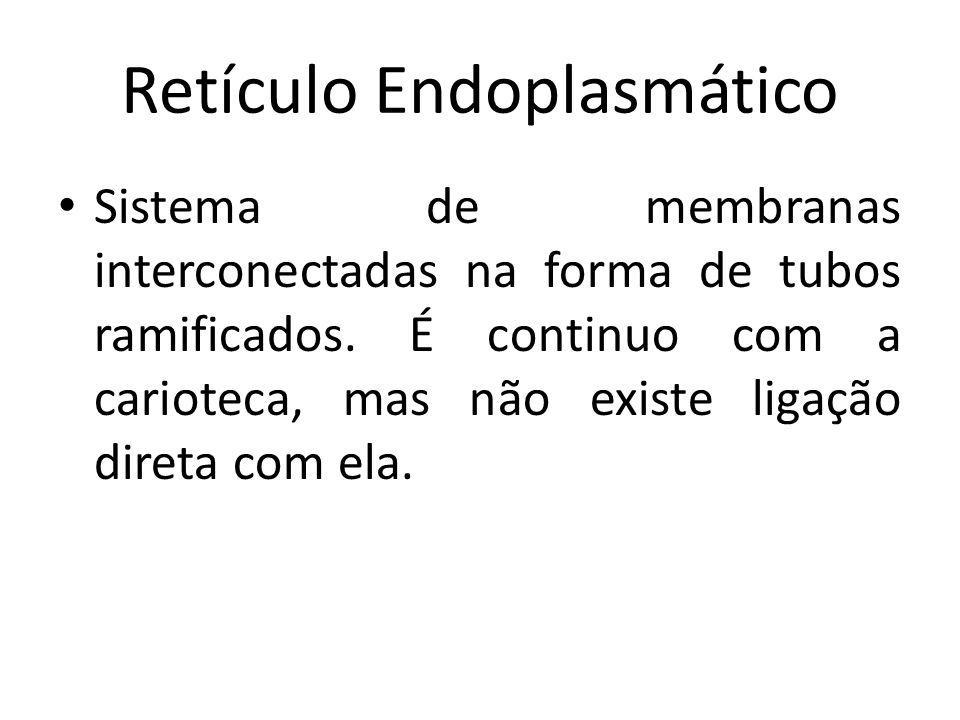 Retículo Endoplasmático Sistema de membranas interconectadas na forma de tubos ramificados. É continuo com a carioteca, mas não existe ligação direta