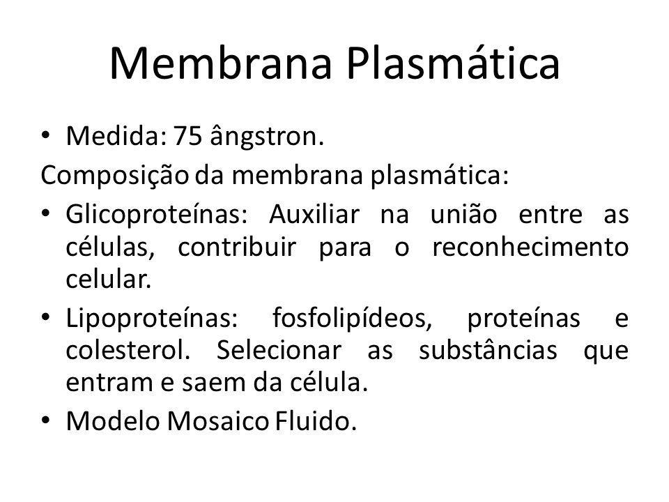 Medida: 75 ângstron. Composição da membrana plasmática: Glicoproteínas: Auxiliar na união entre as células, contribuir para o reconhecimento celular.