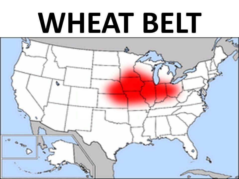 WHEAT BELT