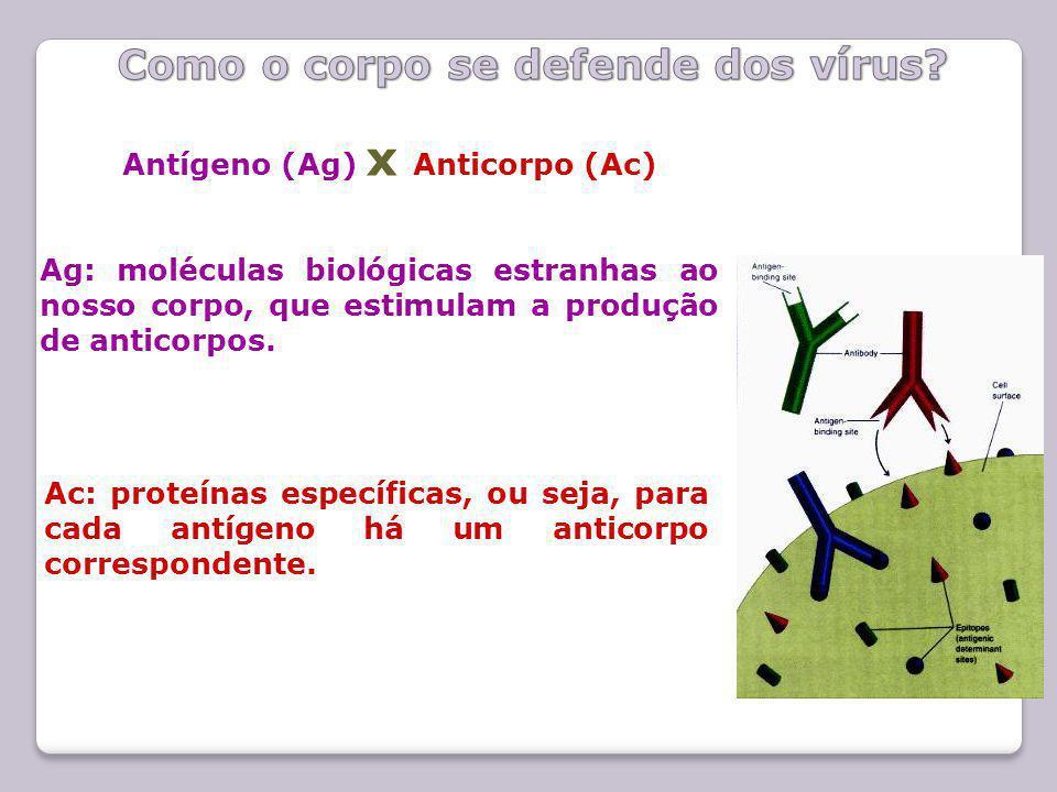 Antígeno (Ag) x Anticorpo (Ac) Ag: moléculas biológicas estranhas ao nosso corpo, que estimulam a produção de anticorpos. Ac: proteínas específicas, o