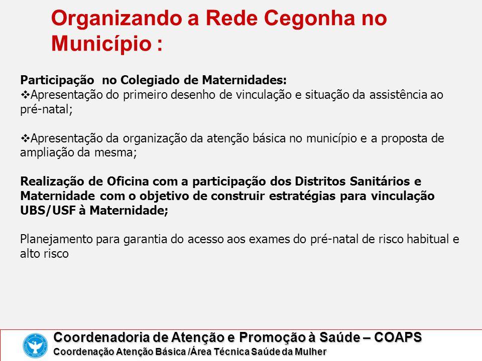 Organizando a Rede Cegonha no Município : Coordenadoria de Atenção e Promoção à Saúde – COAPS Coordenação Atenção Básica /Área Técnica Saúde da Mulher