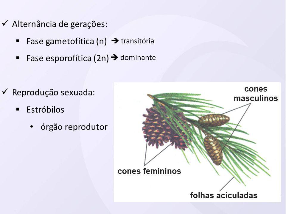 Alternância de gerações: Fase gametofítica (n) Fase esporofítica (2n) Reprodução sexuada: Estróbilos órgão reprodutor transitória dominante