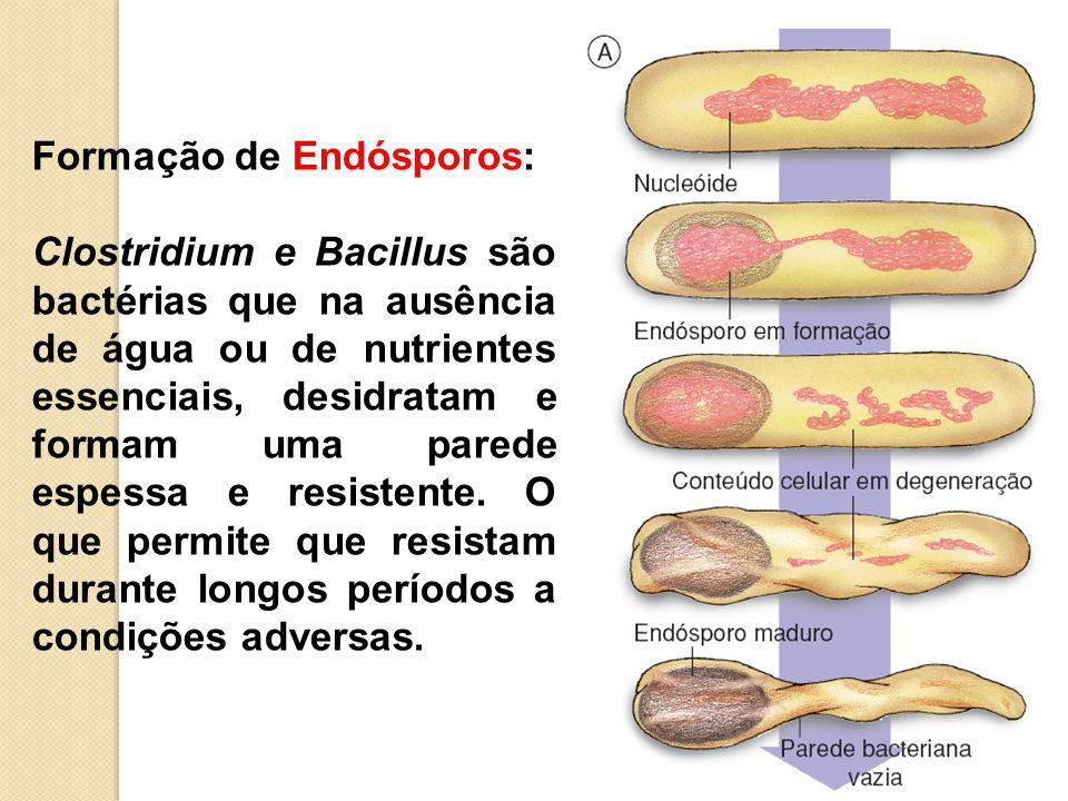 Formação de Endósporos: Clostridium e Bacillus são bactérias que na ausência de água ou de nutrientes essenciais, desidratam e formam uma parede espessa e resistente.