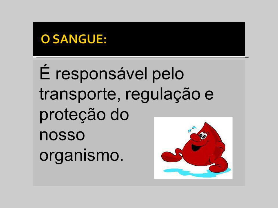 É responsável pelo transporte, regulação e proteção do nosso organismo.