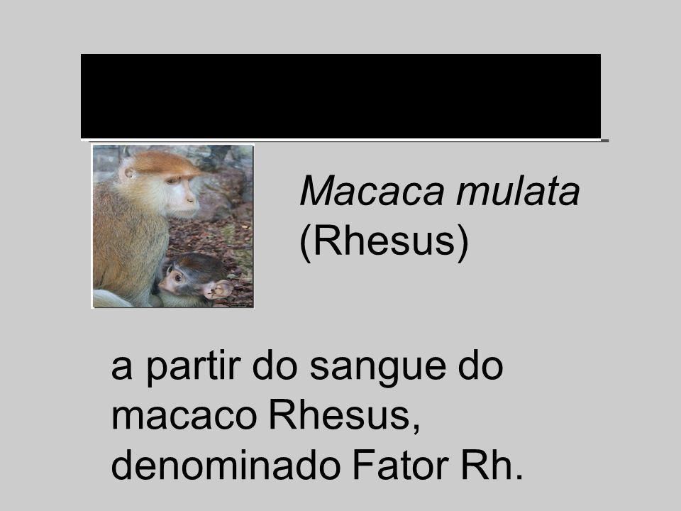 a partir do sangue do macaco Rhesus, denominado Fator Rh. Macaca mulata (Rhesus)