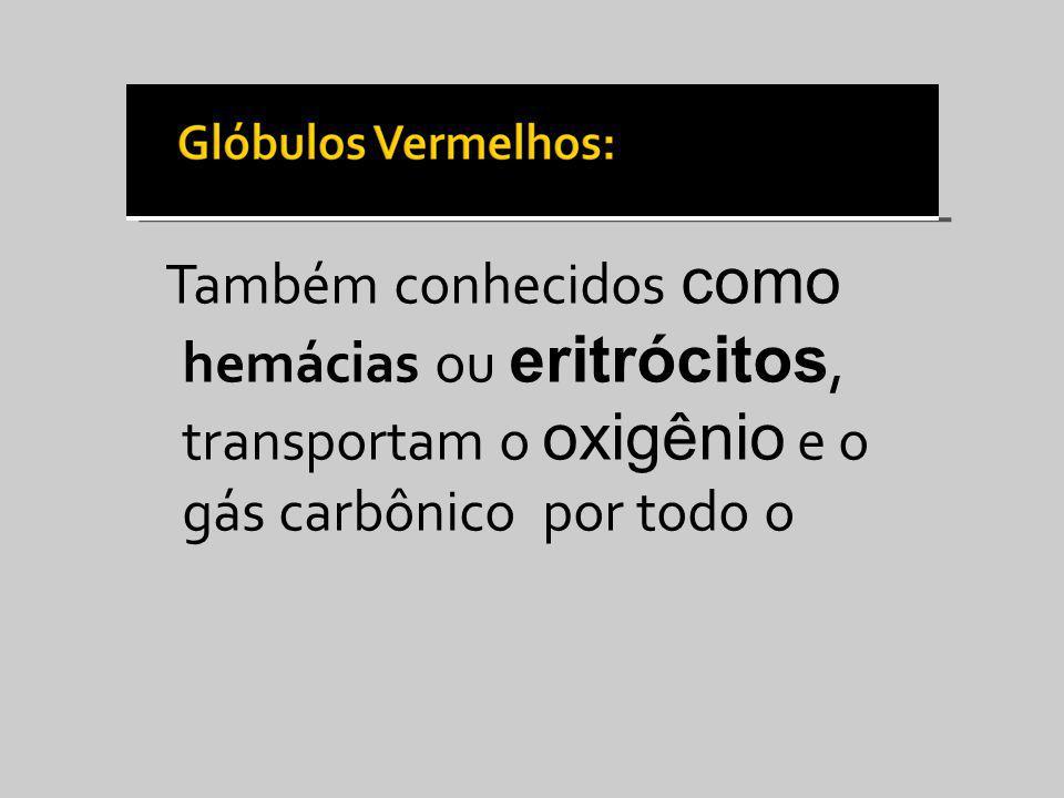 Também conhecidos como hemácias ou eritrócitos, transportam o oxigênio e o gás carbônico por todo o