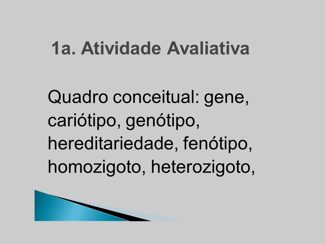 1a. Atividade Avaliativa Quadro conceitual: gene, cariótipo, genótipo, hereditariedade, fenótipo, homozigoto, heterozigoto,