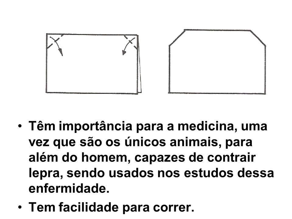 Têm importância para a medicina, uma vez que são os únicos animais, para além do homem, capazes de contrair lepra, sendo usados nos estudos dessa enfe
