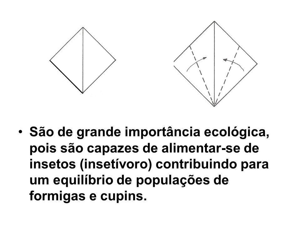 São de grande importância ecológica, pois são capazes de alimentar-se de insetos (insetívoro) contribuindo para um equilíbrio de populações de formiga