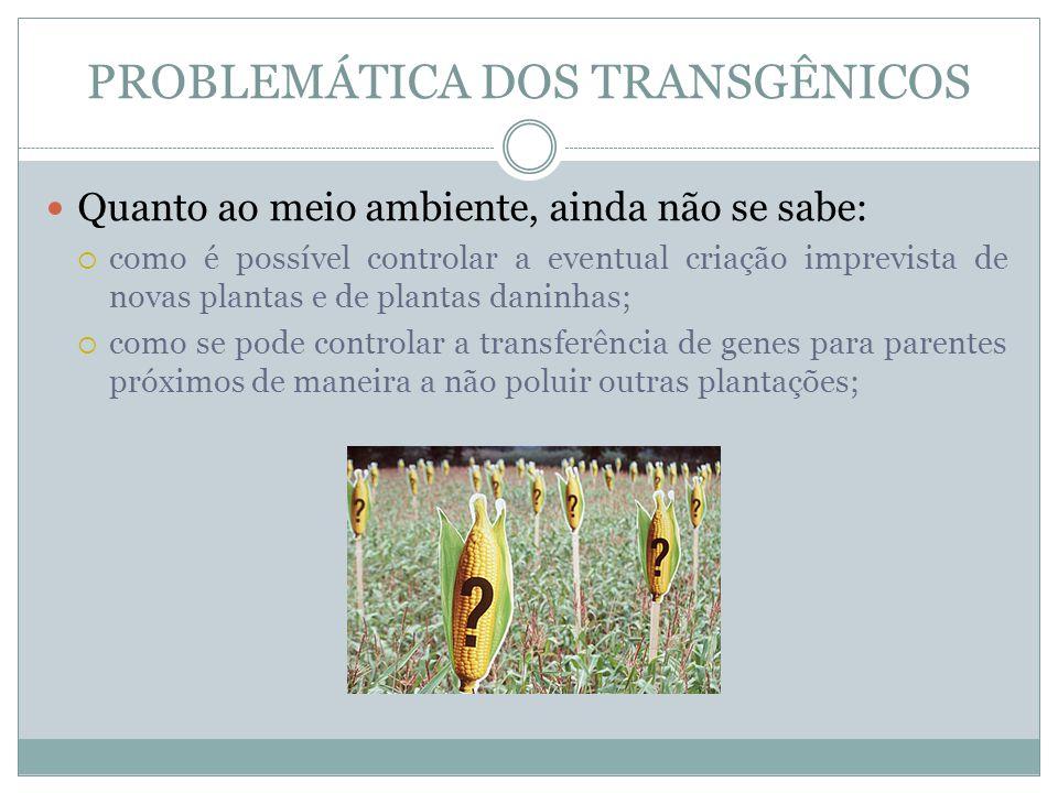 PROBLEMÁTICA DOS TRANSGÊNICOS Quanto ao meio ambiente, ainda não se sabe: como é possível controlar a eventual criação imprevista de novas plantas e d