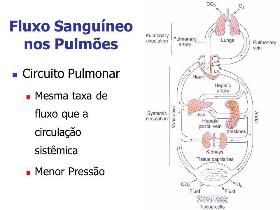 Fluxo Sanguíneo nos Pulmões Circuito Pulmonar Mesma taxa de fluxo que a circulação sistêmica Menor Pressão