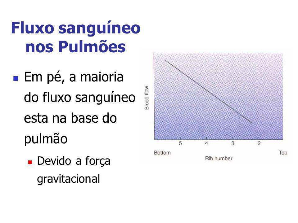 Fluxo sanguíneo nos Pulmões Em pé, a maioria do fluxo sanguíneo esta na base do pulmão Devido a força gravitacional