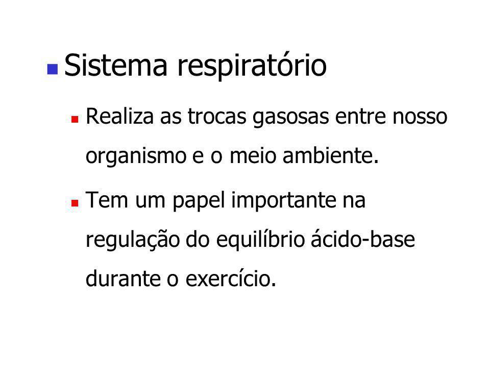 Sistema respiratório Realiza as trocas gasosas entre nosso organismo e o meio ambiente. Tem um papel importante na regulação do equilíbrio ácido-base