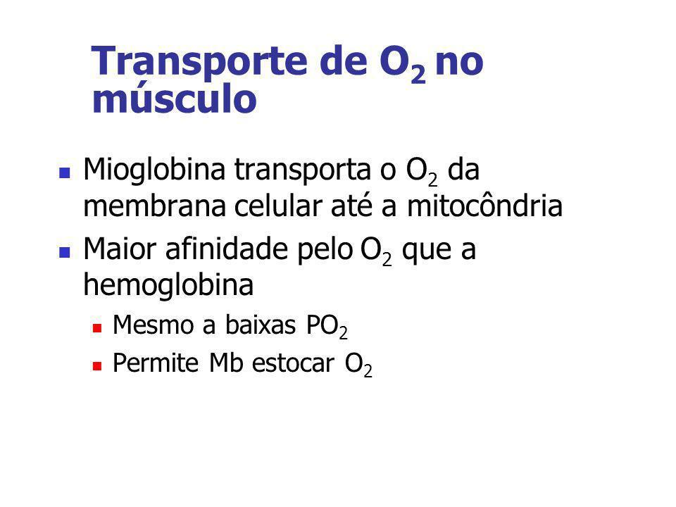Transporte de O 2 no músculo Mioglobina transporta o O 2 da membrana celular até a mitocôndria Maior afinidade pelo O 2 que a hemoglobina Mesmo a baix