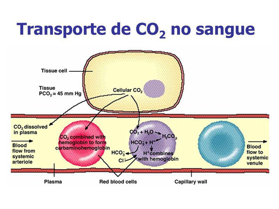 Transporte de CO 2 no sangue