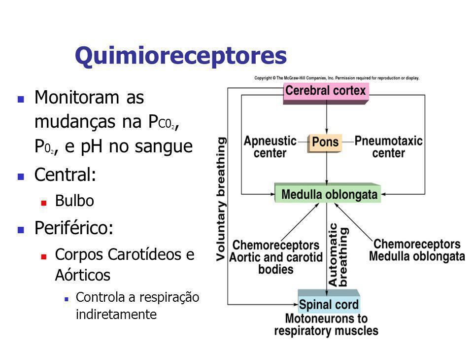 Quimioreceptores Monitoram as mudanças na P C0 2, P 0 2, e pH no sangue Central: Bulbo Periférico: Corpos Carotídeos e Aórticos Controla a respiração