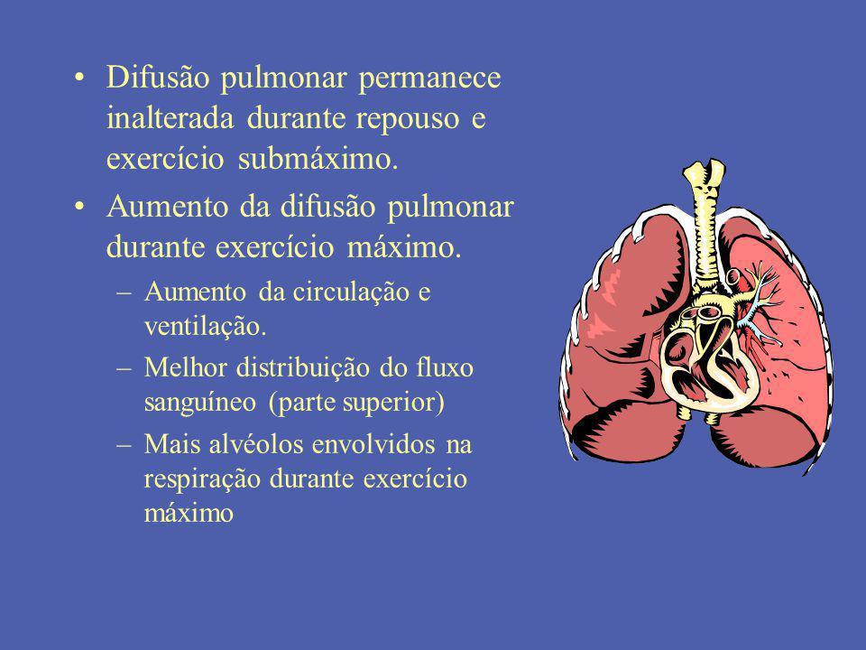 Difusão pulmonar permanece inalterada durante repouso e exercício submáximo. Aumento da difusão pulmonar durante exercício máximo. –Aumento da circula