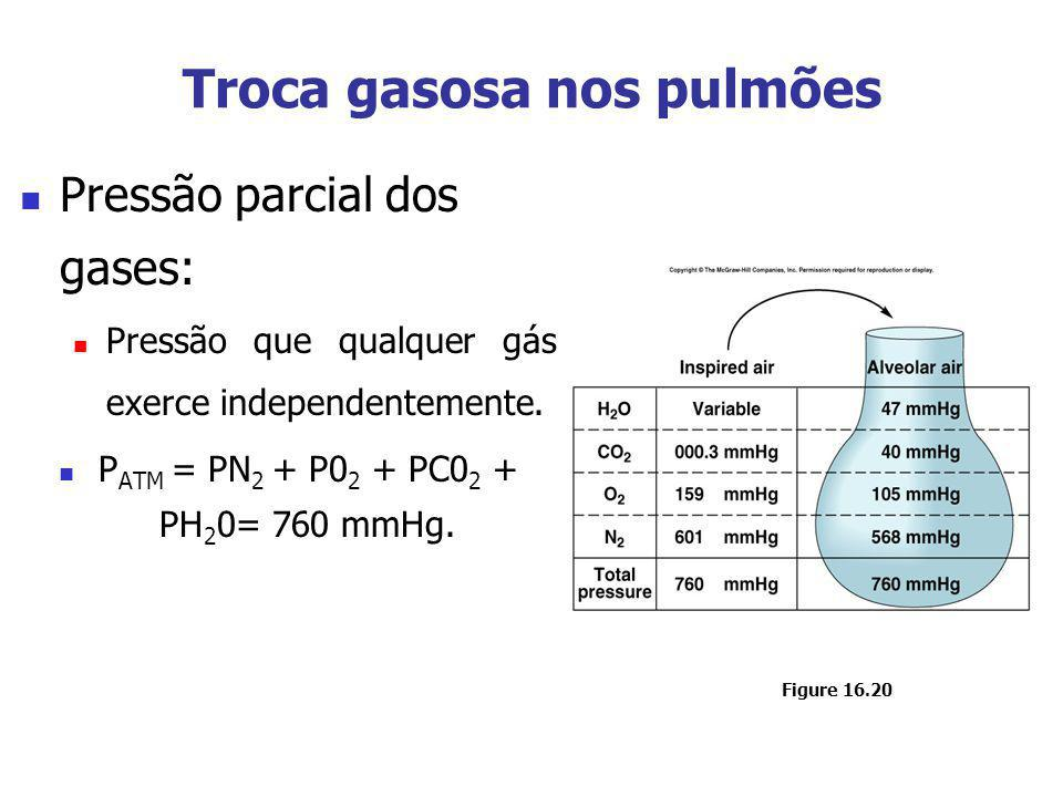 Troca gasosa nos pulmões Pressão parcial dos gases: Pressão que qualquer gás exerce independentemente. P ATM = PN 2 + P0 2 + PC0 2 + PH 2 0= 760 mmHg.