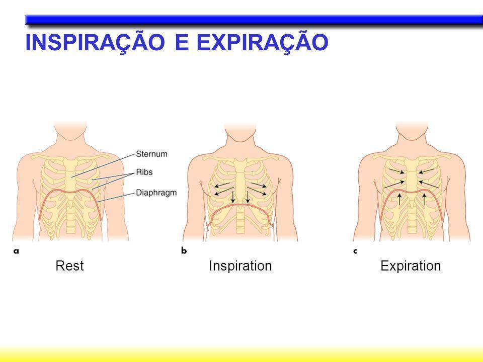 INSPIRAÇÃO E EXPIRAÇÃO Rest Inspiration Expiration