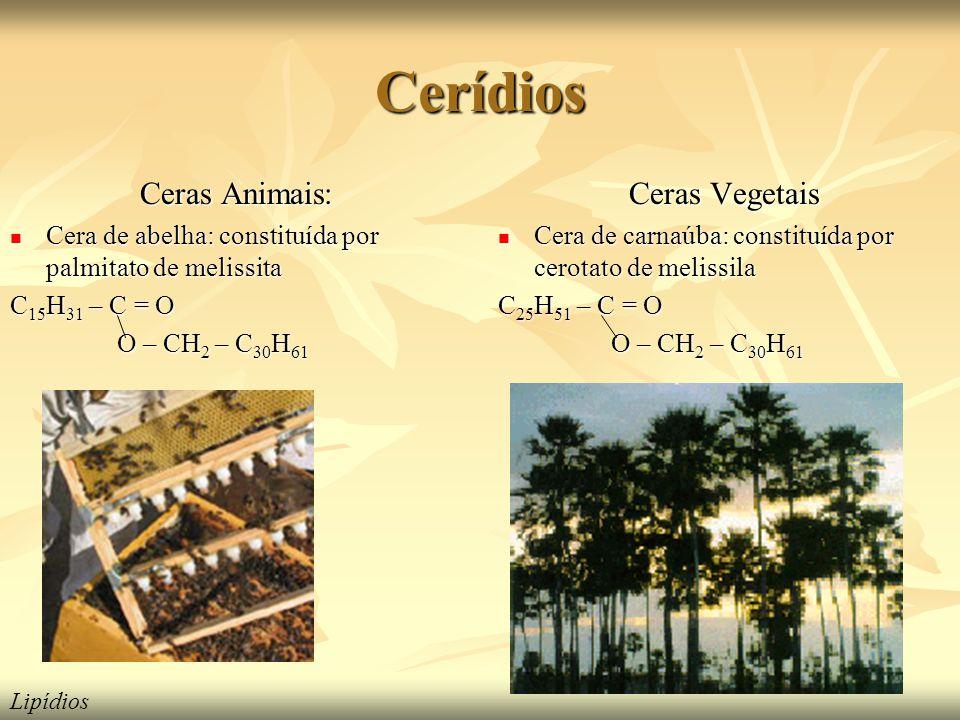 Cerídios Ceras Animais: Cera de abelha: constituída por palmitato de melissita Cera de abelha: constituída por palmitato de melissita C 15 H 31 – C = O O – CH 2 – C 30 H 61 O – CH 2 – C 30 H 61 Ceras Vegetais Cera de carnaúba: constituída por cerotato de melissila Cera de carnaúba: constituída por cerotato de melissila C 25 H 51 – C = O O – CH 2 – C 30 H 61 O – CH 2 – C 30 H 61 Lipídios
