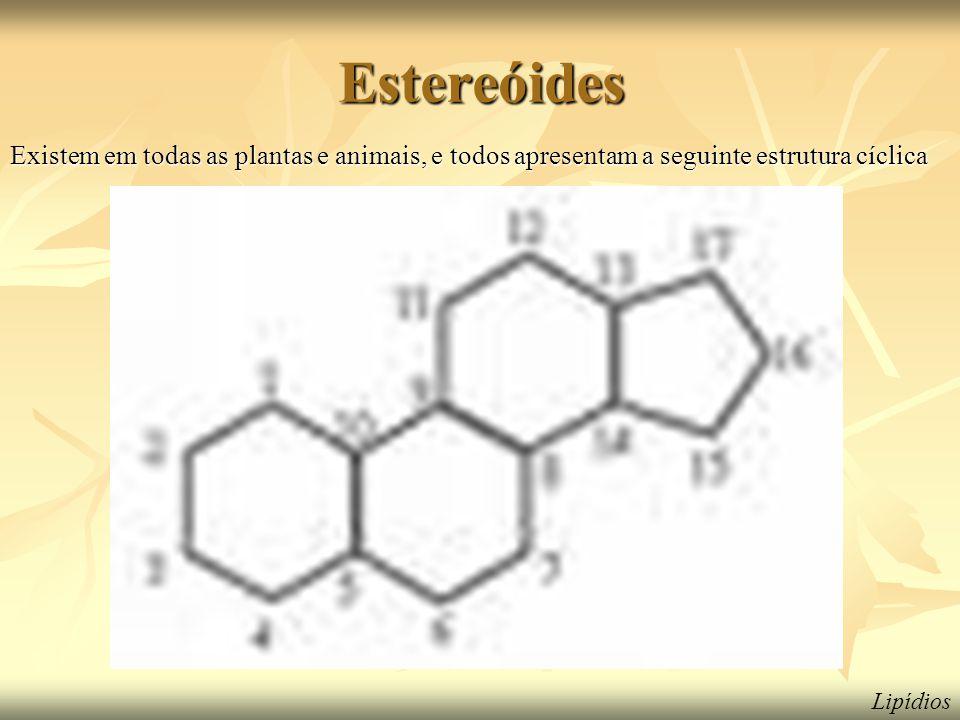 Estereóides Existem em todas as plantas e animais, e todos apresentam a seguinte estrutura cíclica Lipídios