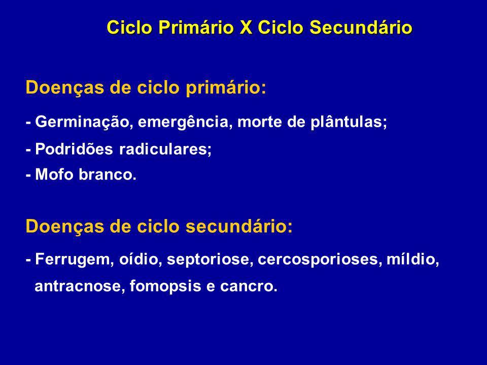 Ciclo Primário X Ciclo Secundário Doenças de ciclo primário: - Germinação, emergência, morte de plântulas; - Podridões radiculares; - Mofo branco. Doe