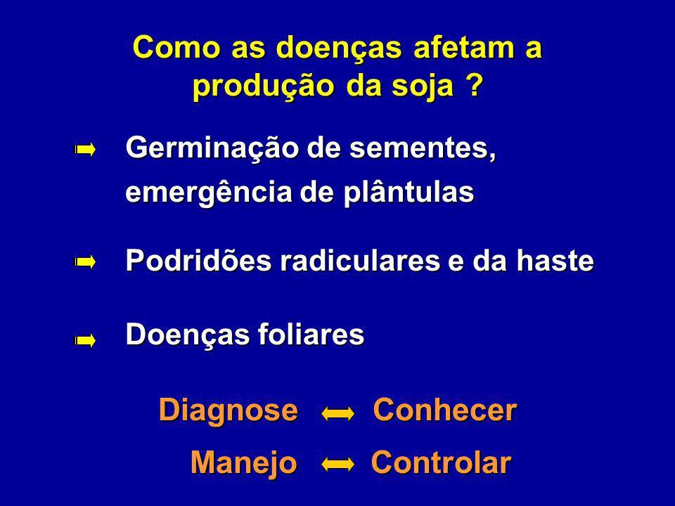 Como as doenças afetam a produção da soja ? Germinação de sementes, emergência de plântulas emergência de plântulas Podridões radiculares e da haste P
